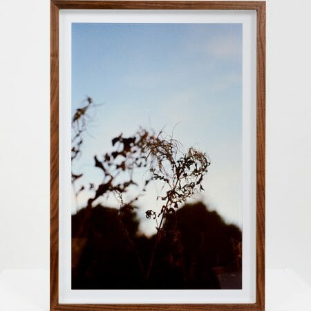 roots-giclée-photo-print-art-close-up-colour-nature