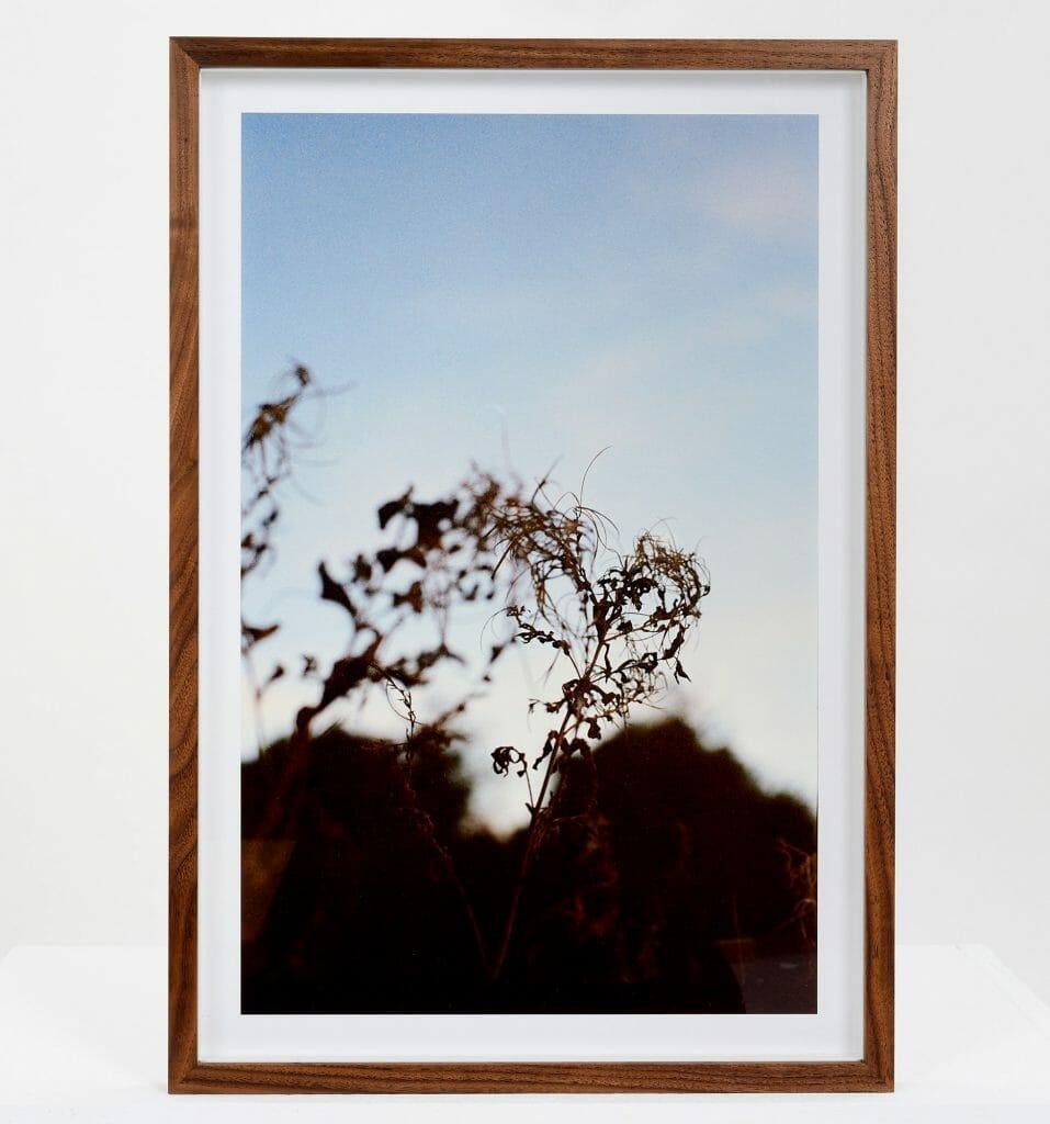 roots-giclée-photo-print-art-close-up-colour-nature
