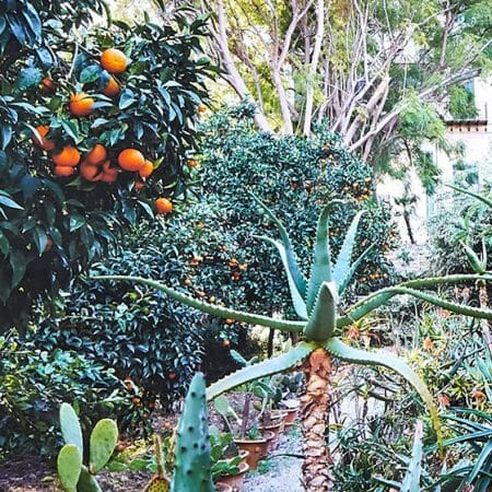 plants-in-the-botanical-gardens-sicily