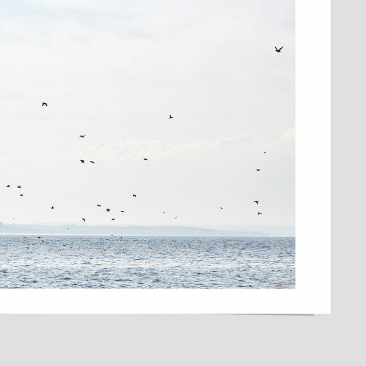 farne-islands-in-spring-photograph-print-photographer-home