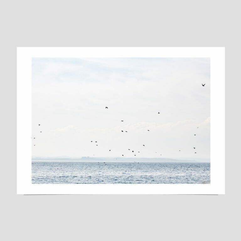 farne-islands-in-spring-giclée-photo-print-sea-sky-birds