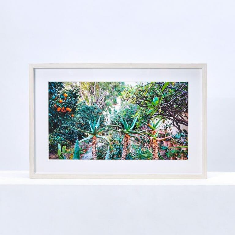 plants-in-the-botanical-gardens-sicily-giclée-photo-print-colour
