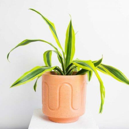 maxi-pot-peach-homeware-planter