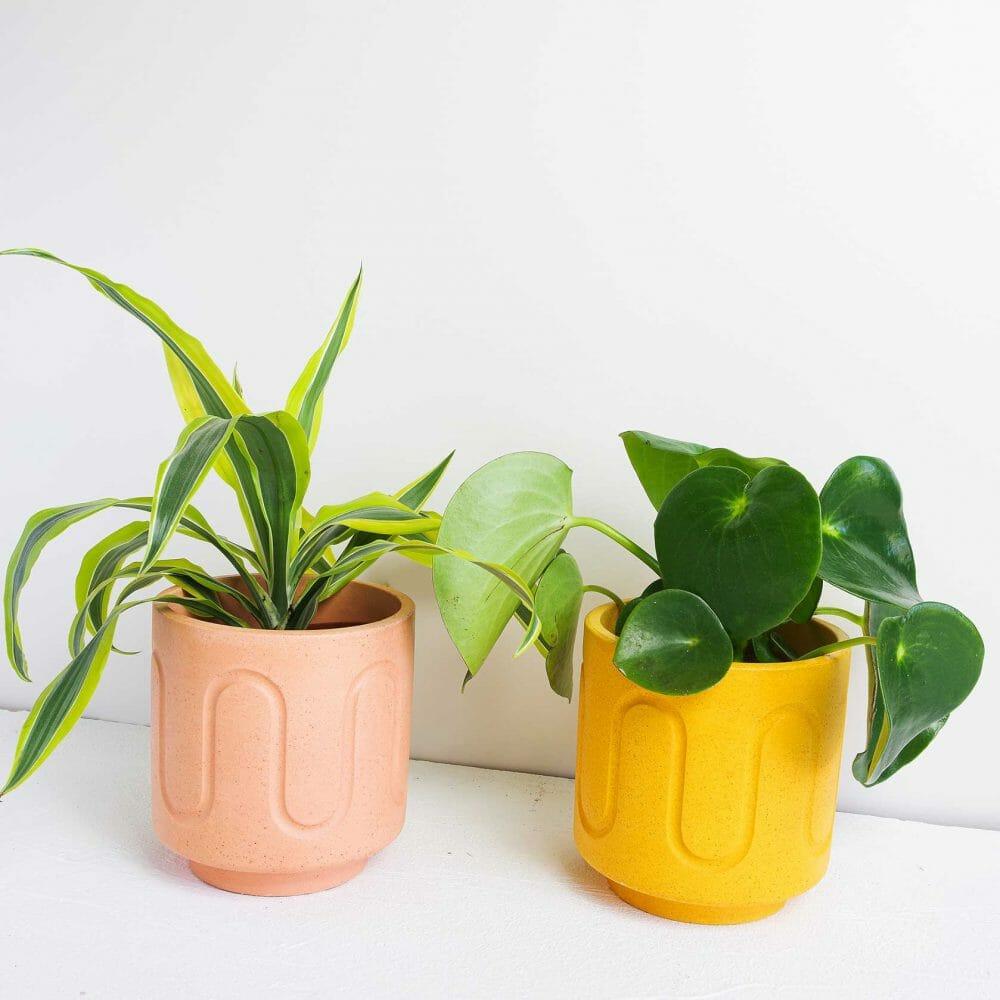 maxi-pot-homeware-planter